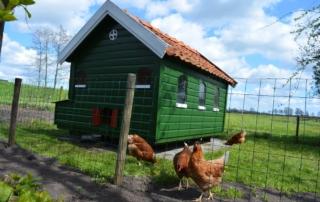 B&B Friesland aan de Leijen kippen